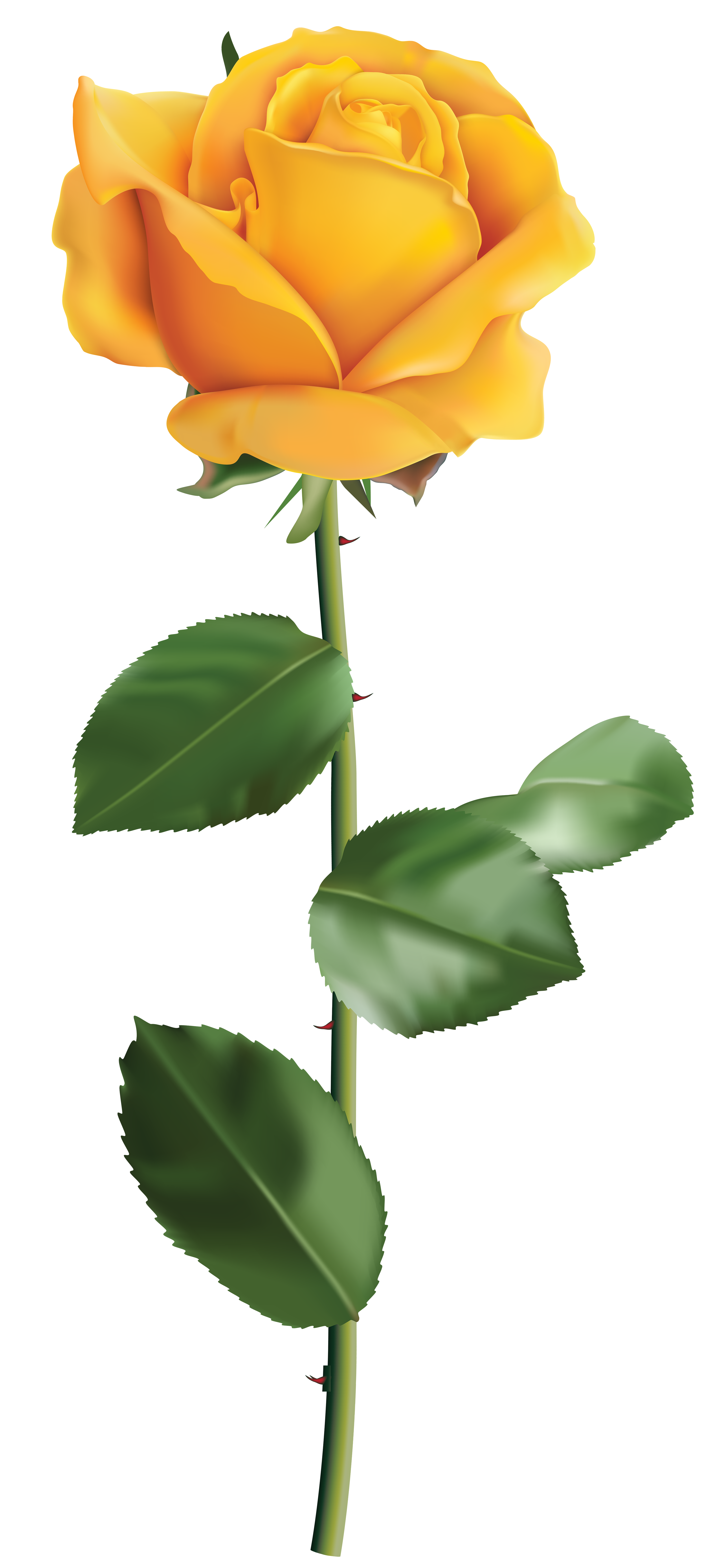 Yellow Rose clipart green rose PNG Gallery Image  size