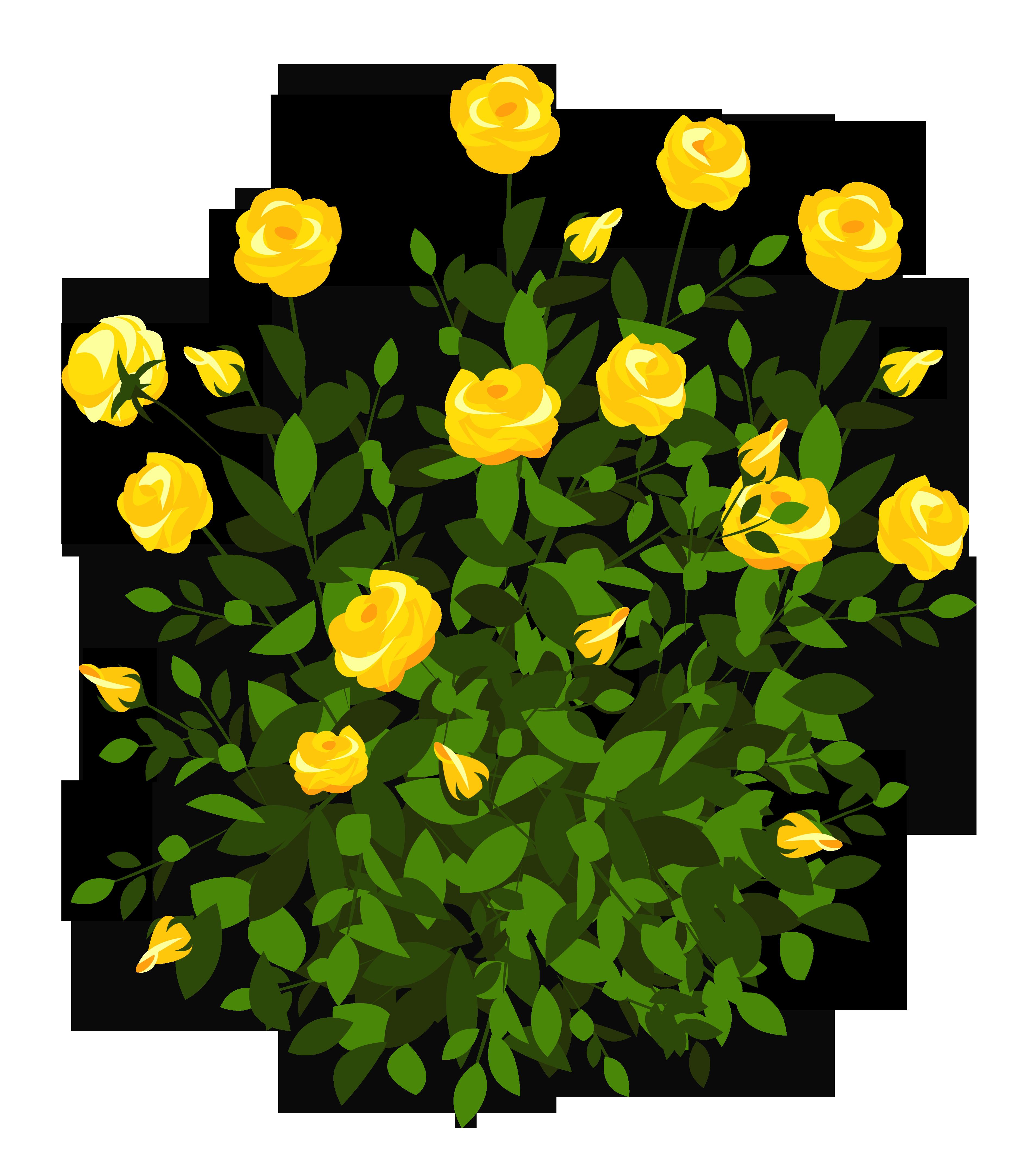 Rose clipart rose plant #9