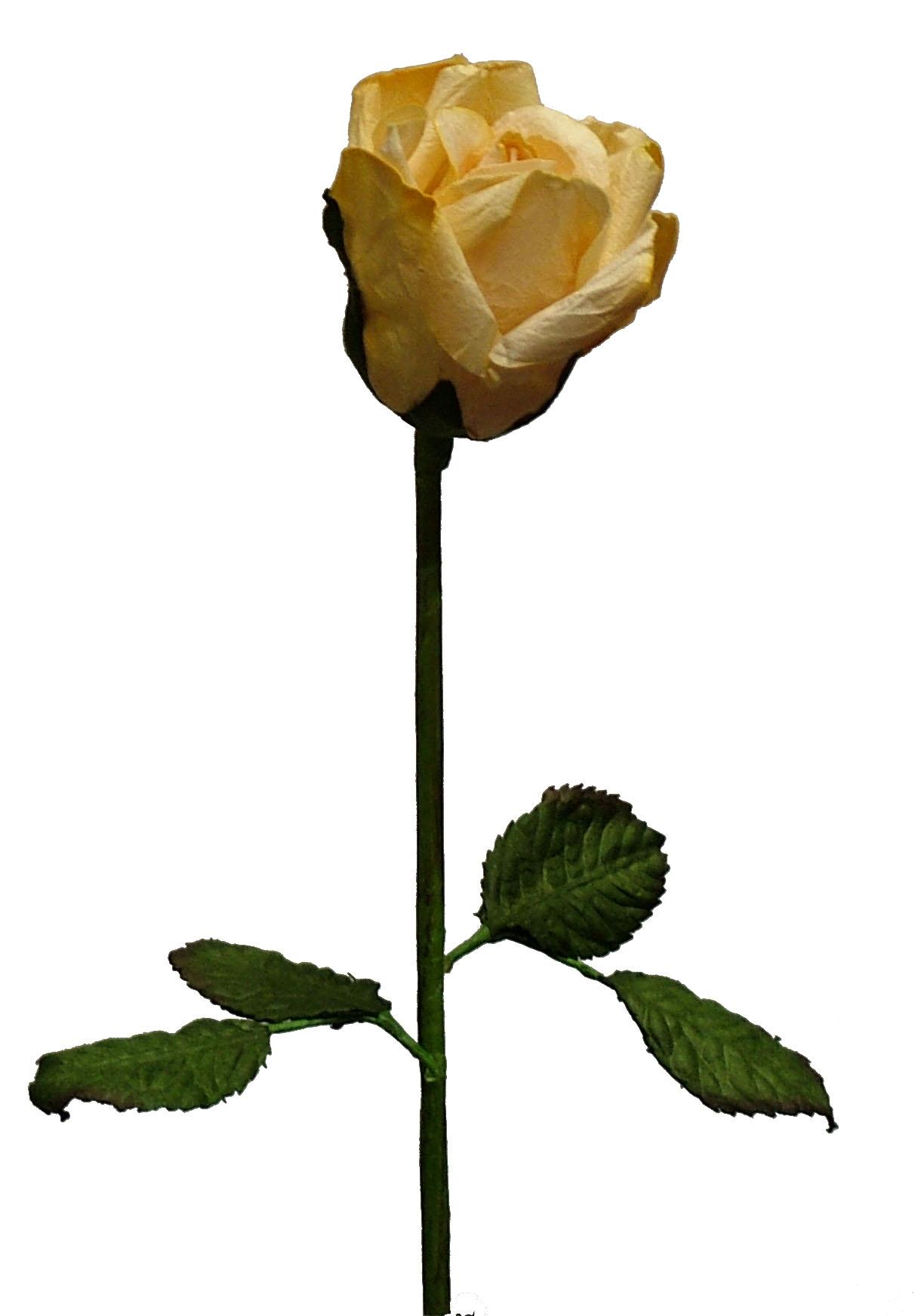 Yellow Rose clipart long stem #9