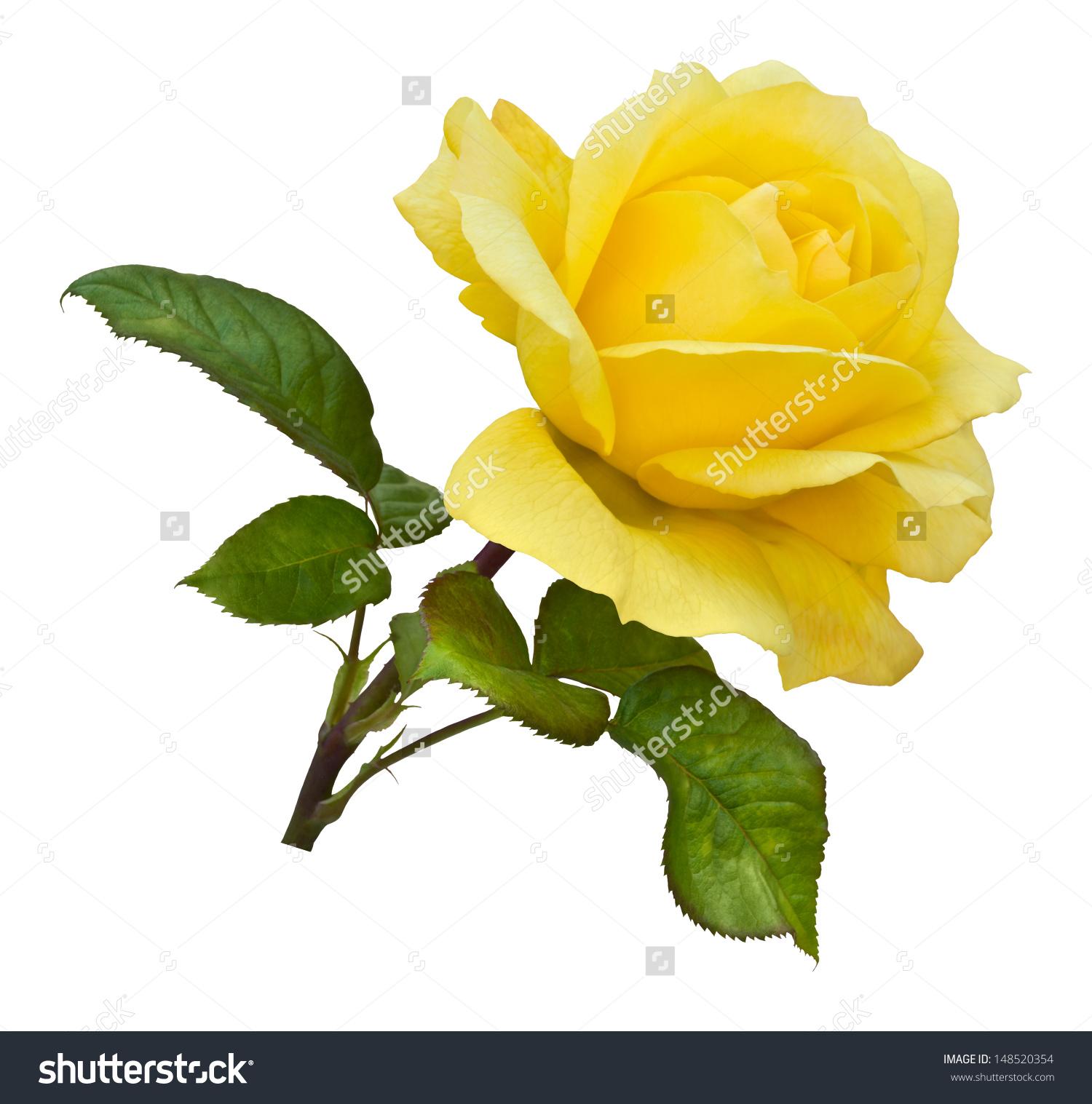 Yellow Rose clipart long stem #13