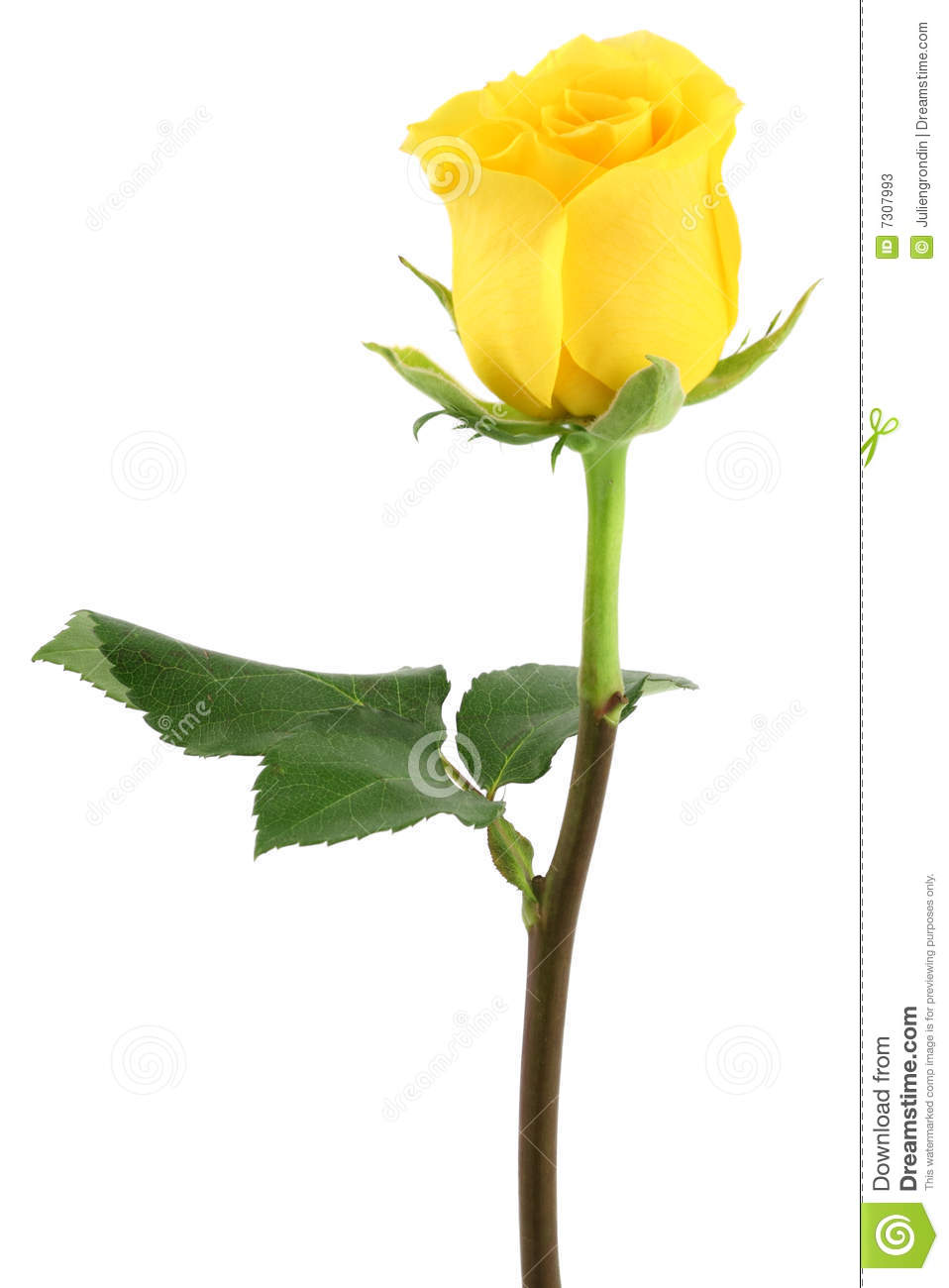 Yellow Rose clipart long stem Rose Yellow Clipart Rose Stem