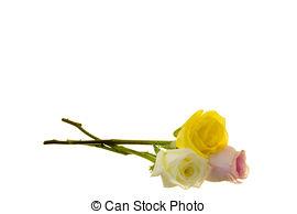Yellow Rose clipart long stem #6