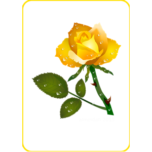 Yellow Rose clipart love flower Color floral roses red nature