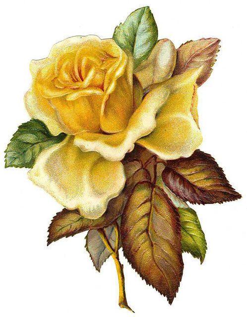 Yellow Rose clipart love flower ❤ · Pinterest ideas Victorian
