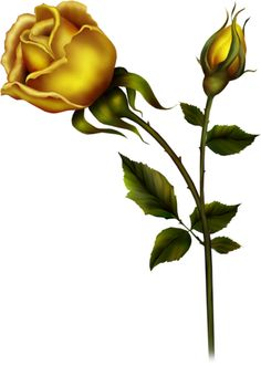 Yellow Rose clipart love flower Rose Clip  yellow images