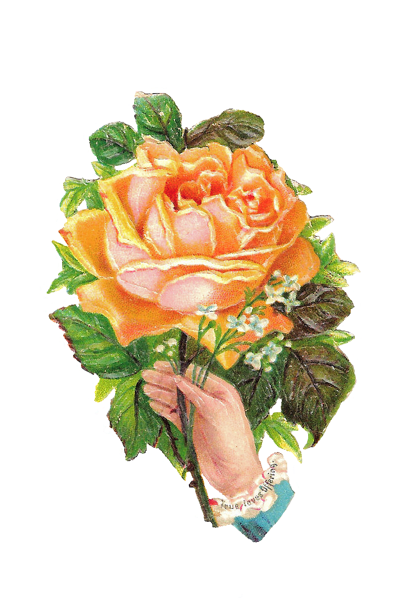Yellow Rose clipart love flower Spectacular yellow around gold the
