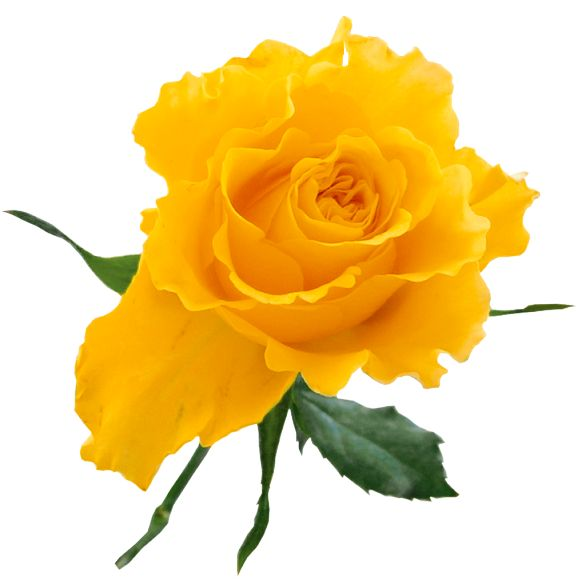 Yellow Rose clipart love flower And more Pinterest Flowers images