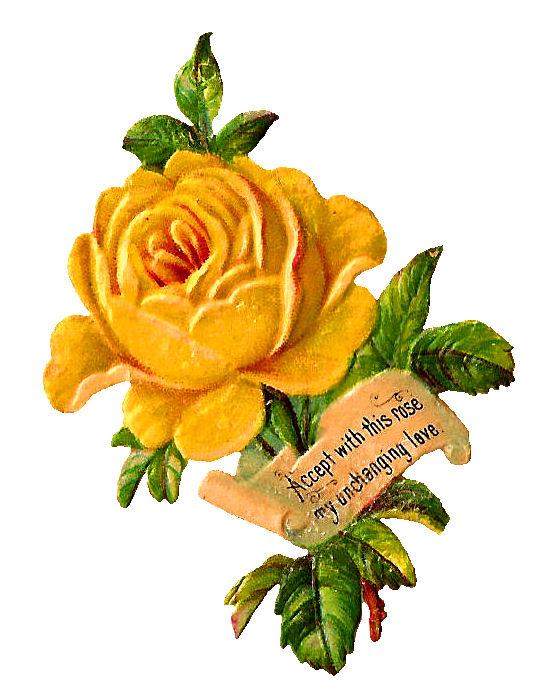 Yellow Rose clipart orange rose Rose Download Yellow rose Flower