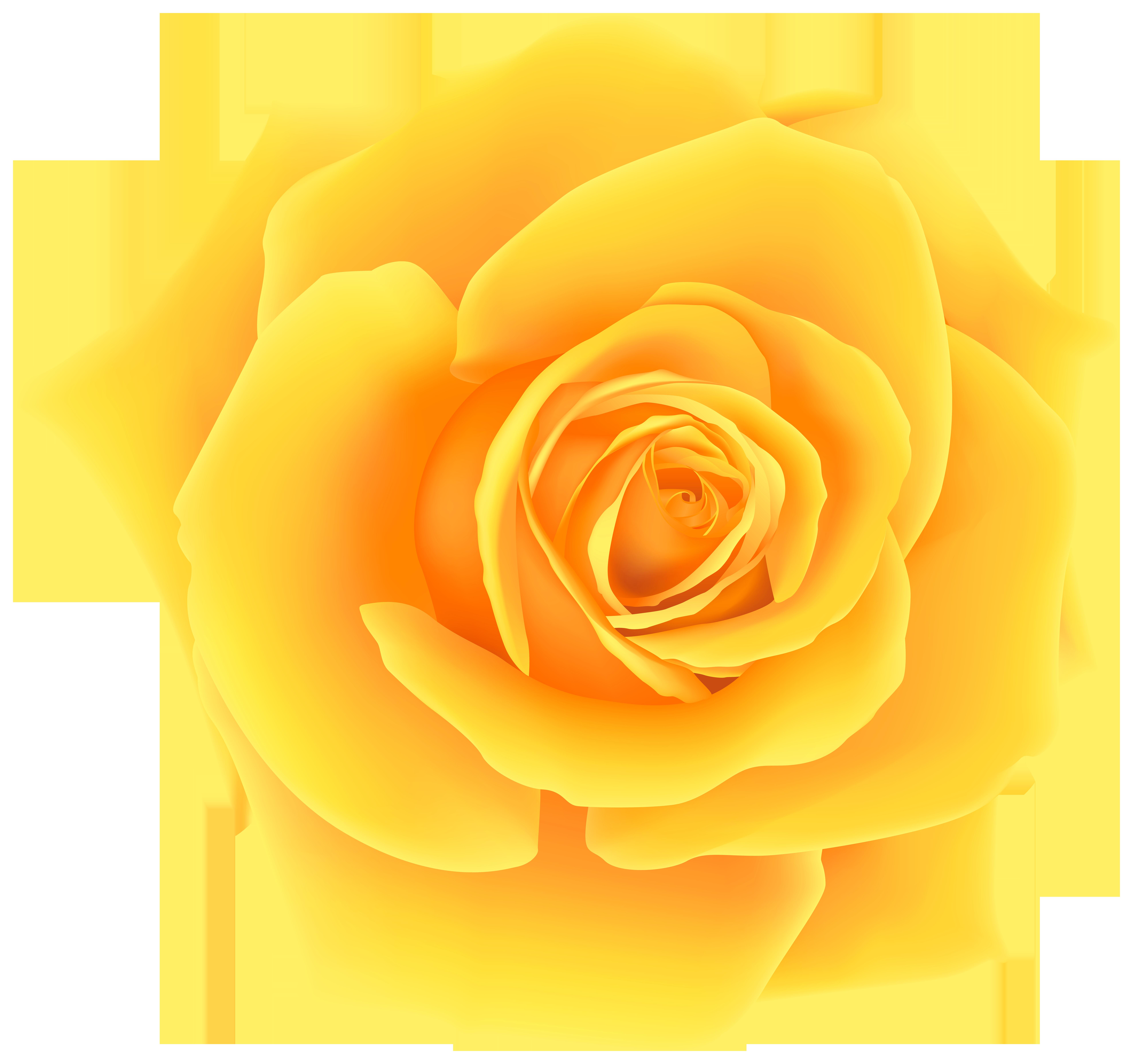 Yellow Rose clipart orange rose Yopriceville Gallery Rose High Yellow