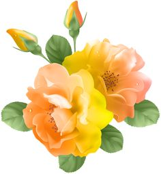 Yellow Rose clipart orange rose Clipart Pinterest PNG PNG Clipart