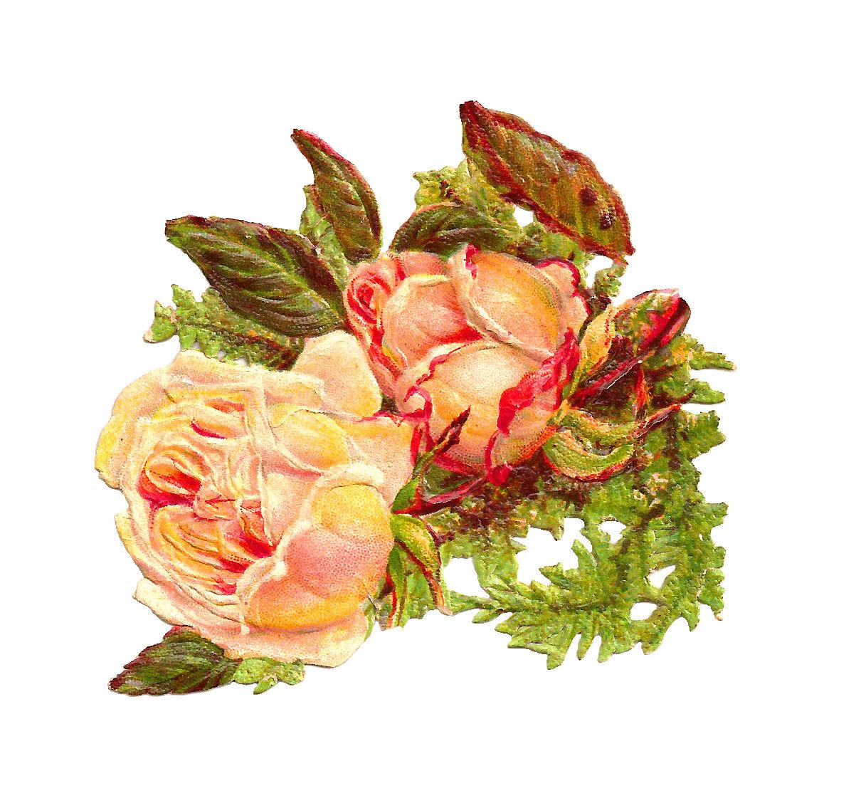 Yellow Rose clipart orange rose Rose 2 Images: Yellow Yellow