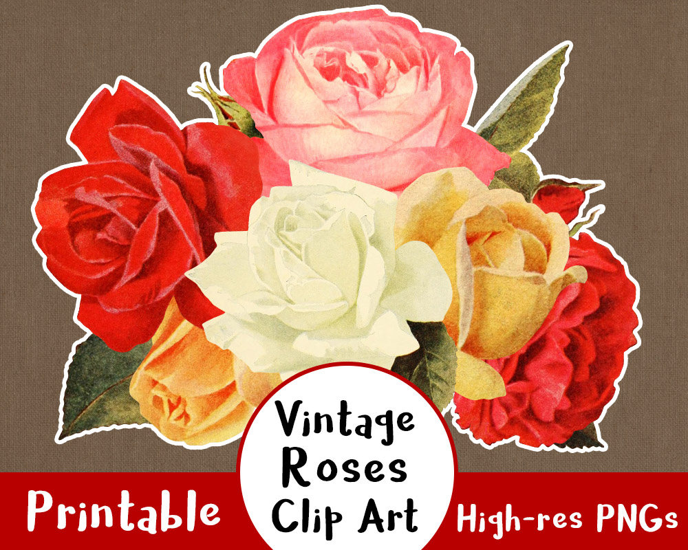 Vintage Flower clipart yellow rose Floral a Rose Rose is