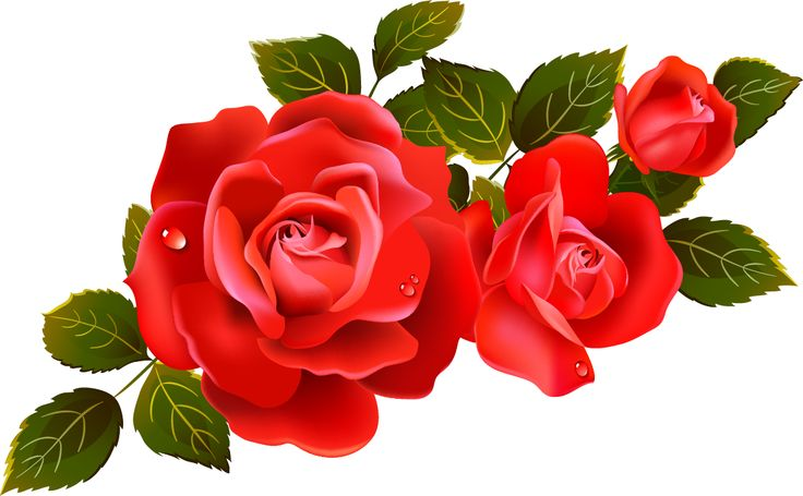 Red Rose clipart rose flower #5