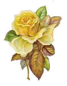Yellow Rose clipart red #4
