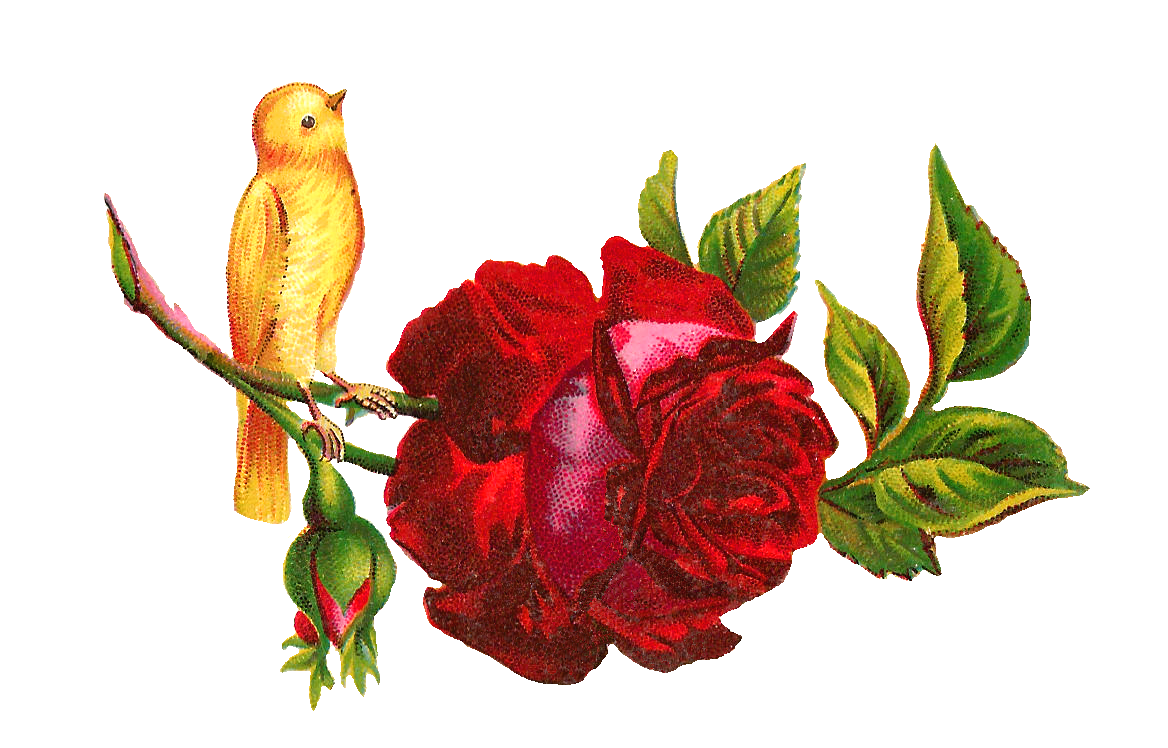 Yellow Rose clipart red #3