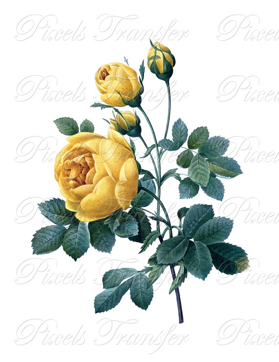 Yellow Rose clipart rose painting #6