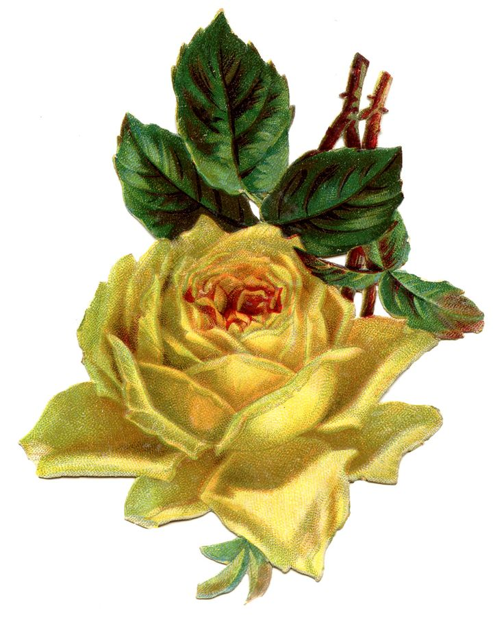 Yellow Rose clipart sweetheart Yellow jpg JPEG vintage clipart