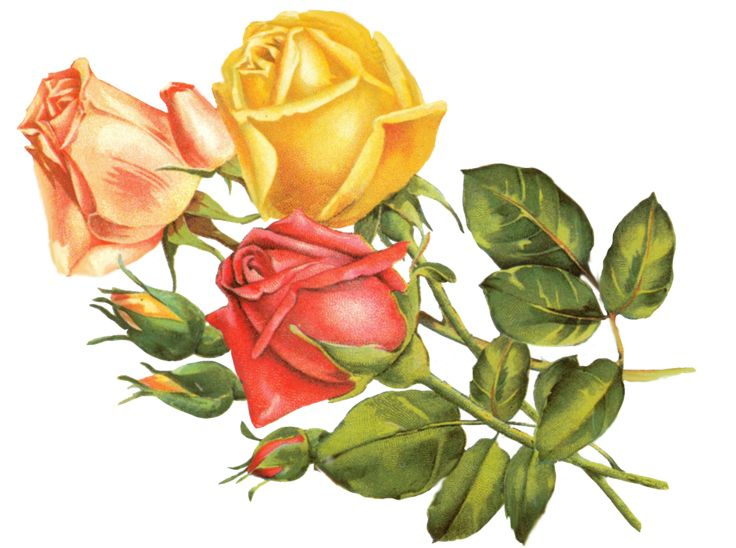Yellow Rose clipart sweetheart This on & Find and