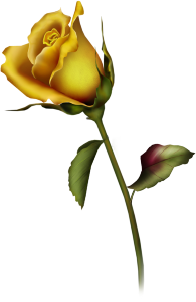 Yellow Rose clipart transparent #3