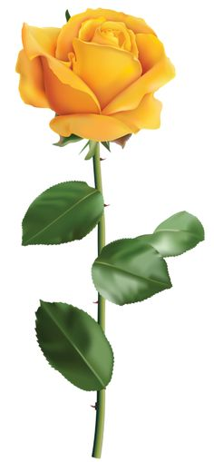 Yellow Rose clipart transparent #1