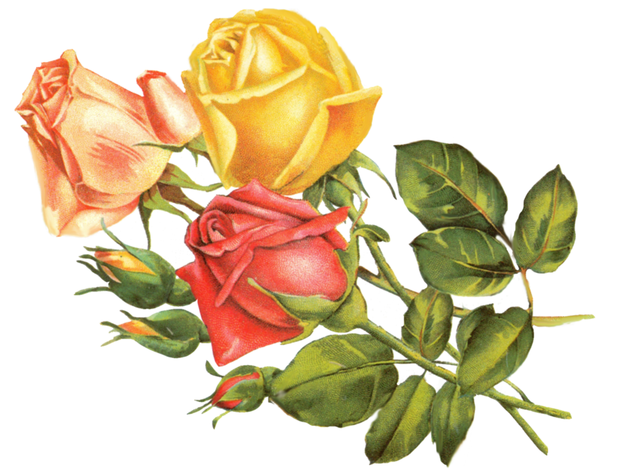 Vintage Flower clipart yellow rose Download by Free  on