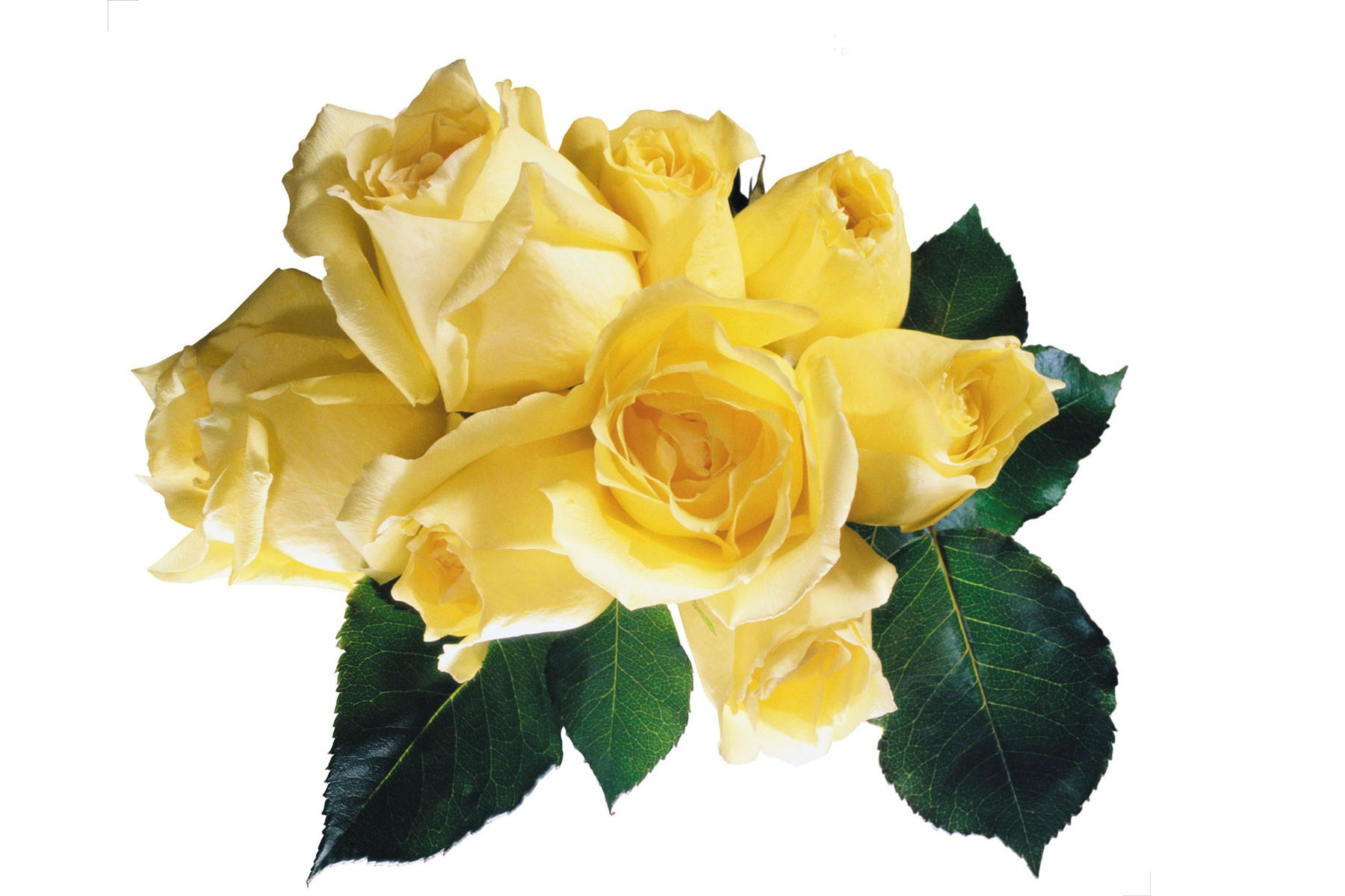 Yellow Rose clipart yellow bouquet Flowers Clip Art Roses Yellow
