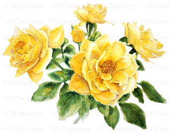Yellow Rose clipart yellow bouquet Painted Art Hand Watercolor Flower