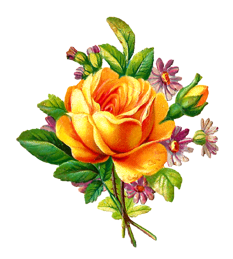 Yellow Rose clipart yellow bouquet Stock Antique Images: image yellow