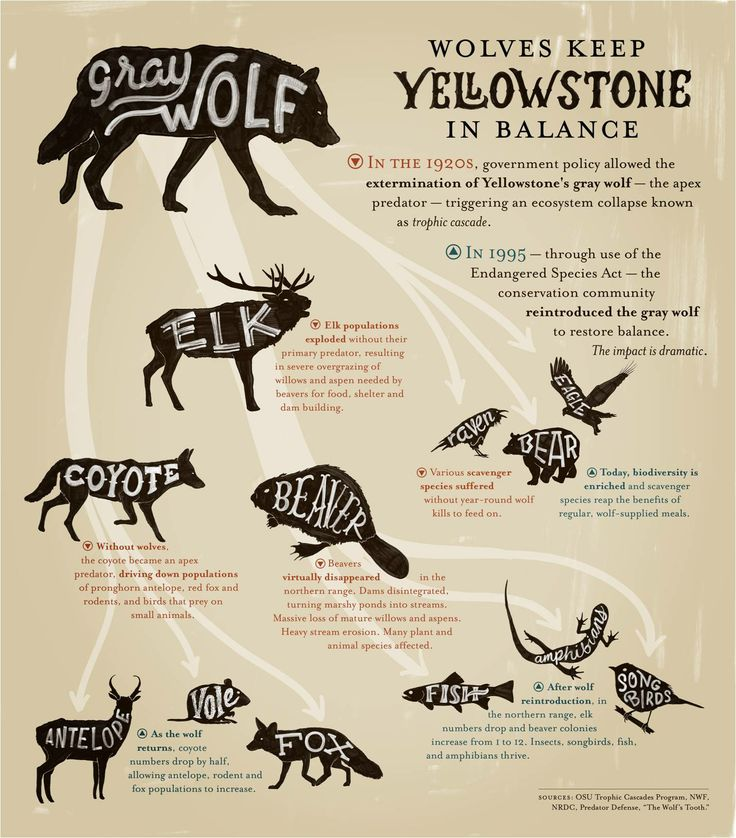 Yellowstone clipart wildlife biologist Carbon Best What Infographic available