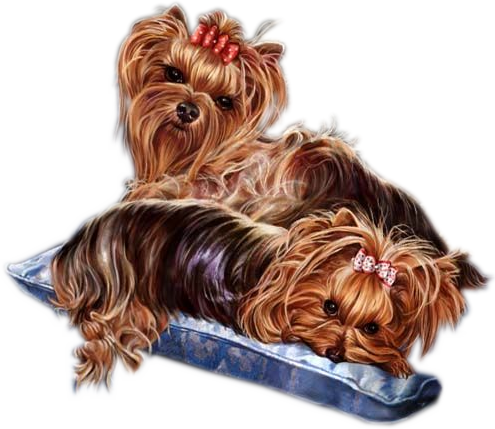 Yorkies clipart pet Cliparts Zone Cliparts Oliver Clip