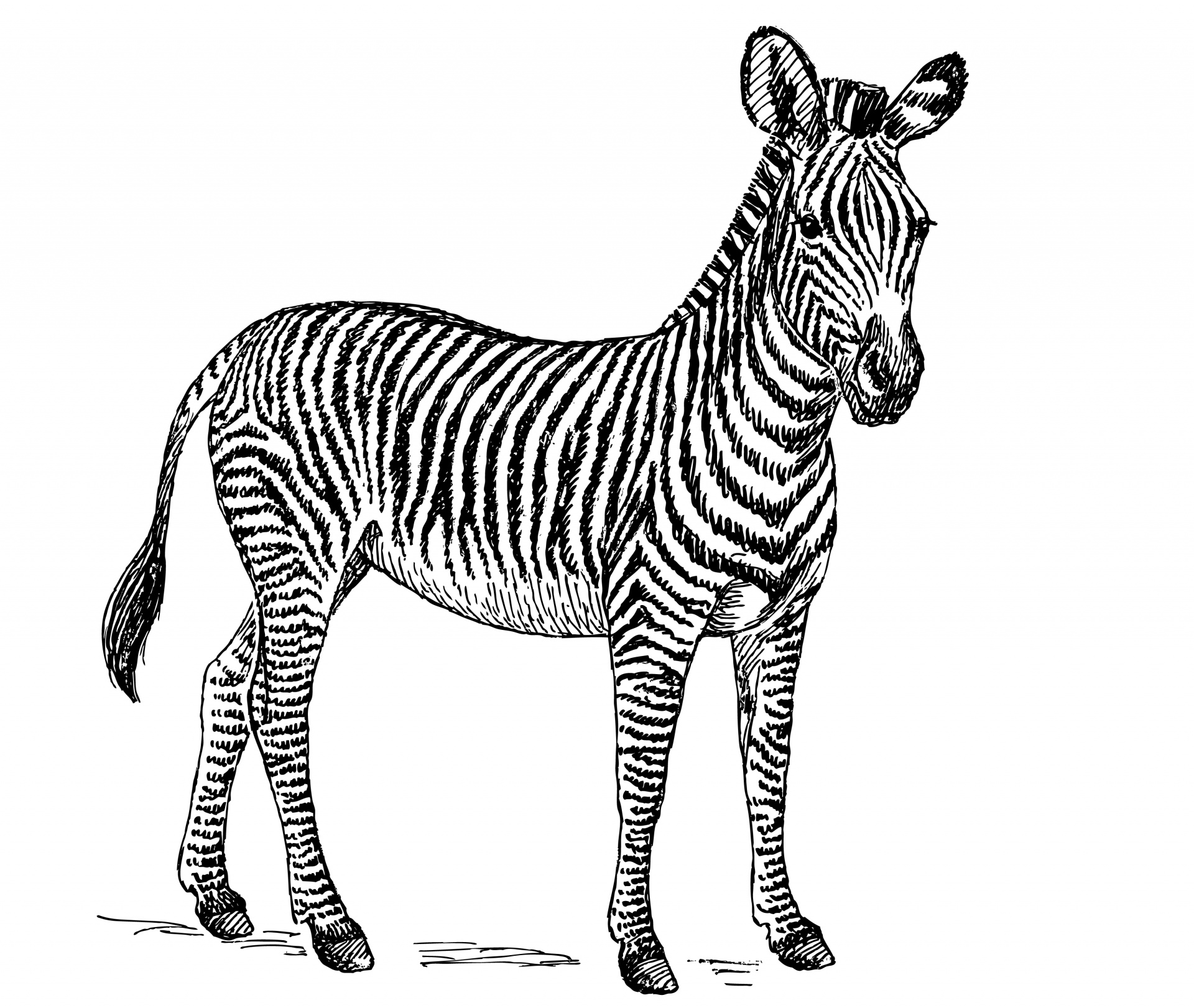Zebra clipart big Clipart Public Illustration Photo Stock