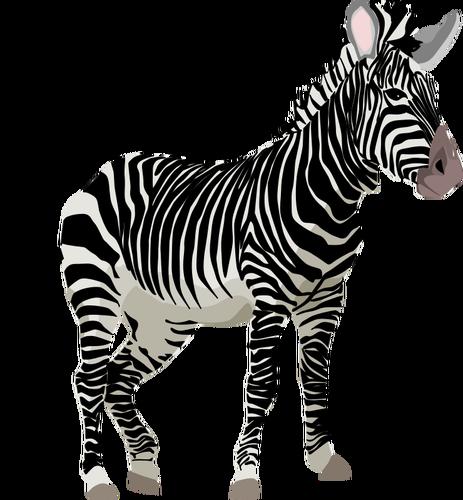 Zebra clipart colored Animal  (PUBLIC color Vector