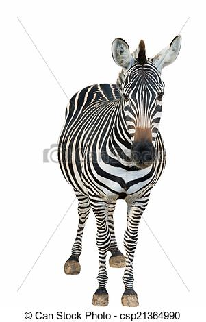 Zebra clipart front view #1