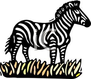 Zebra clipart grass In Grass Picture Zebra Clipart