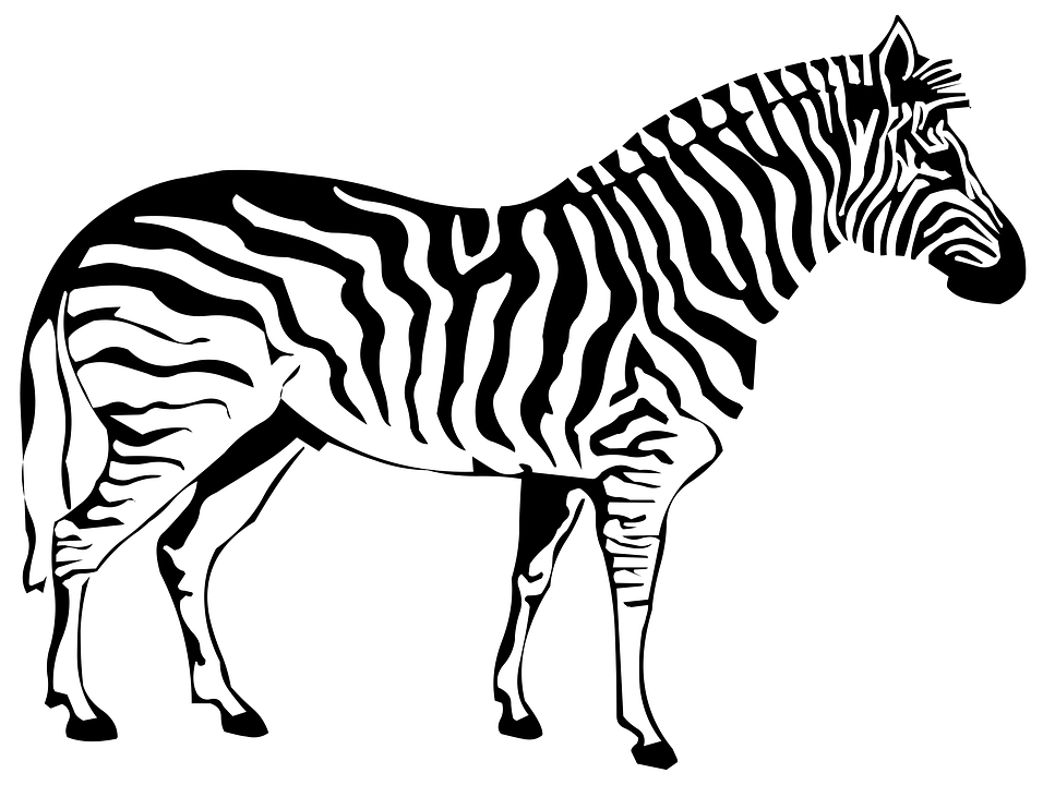 Zebra clipart shadow Free Pixabay on Image Drawing