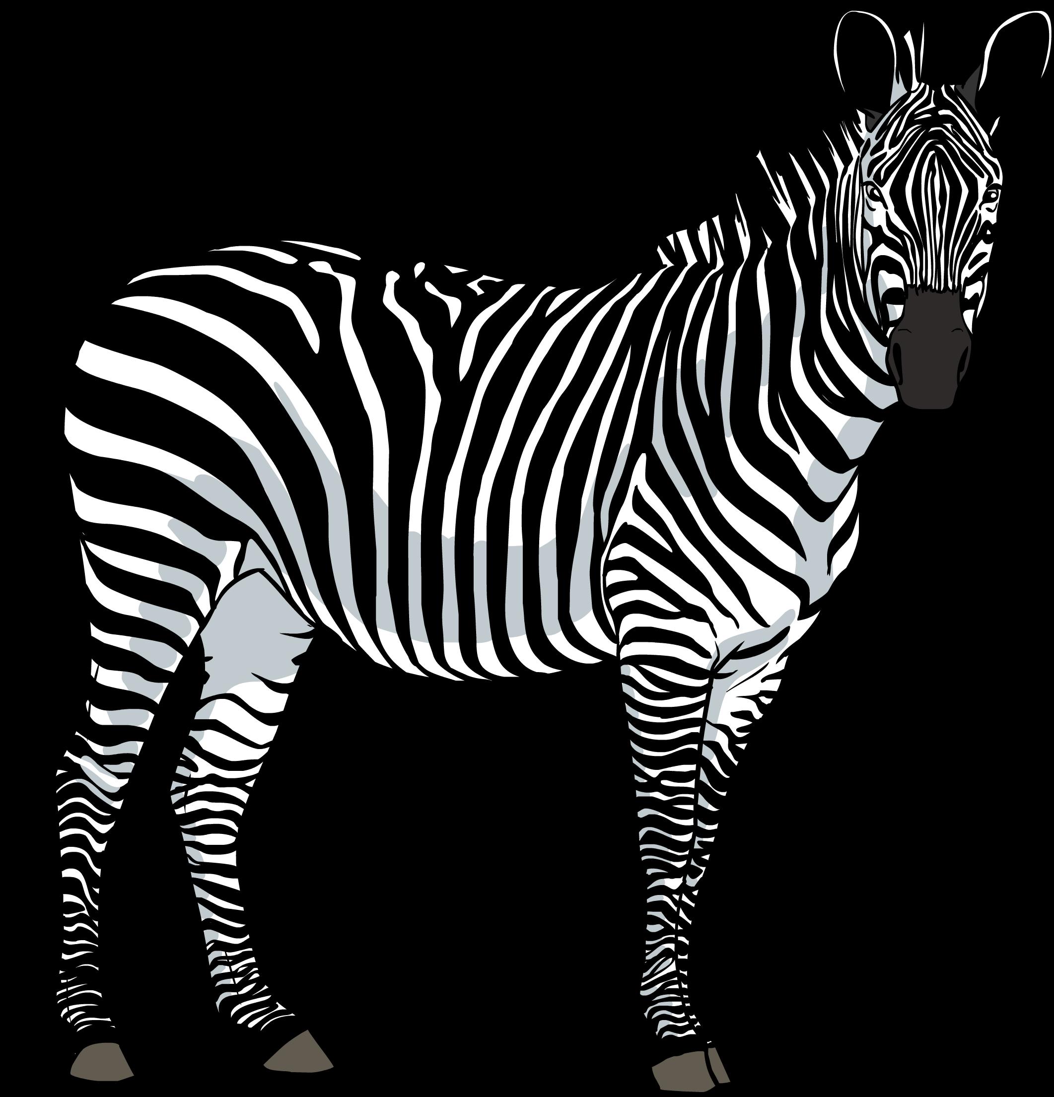 Zebra clipart transparent background PNG Zebra Zebra image free
