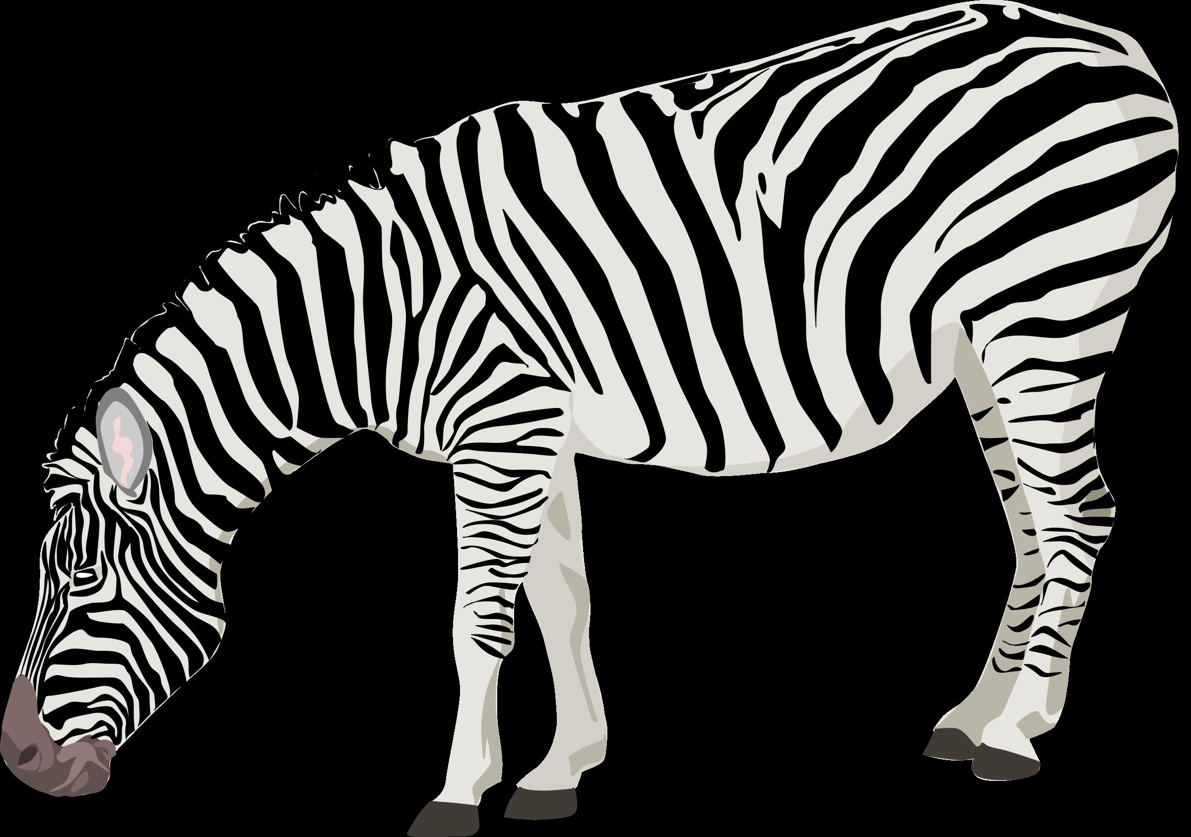 Zebra clipart transparent background PNGMart PNG Zebra Zebra Photos