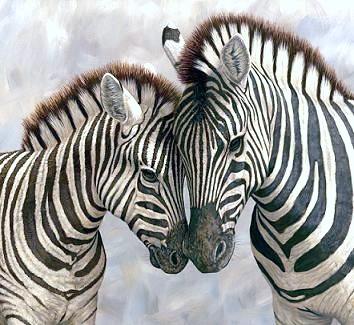 Zebra clipart two Picture of zebras Clipart clipart