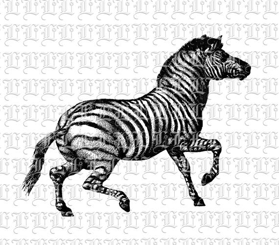 Zebra clipart vintage White Zebra Clip Art Image