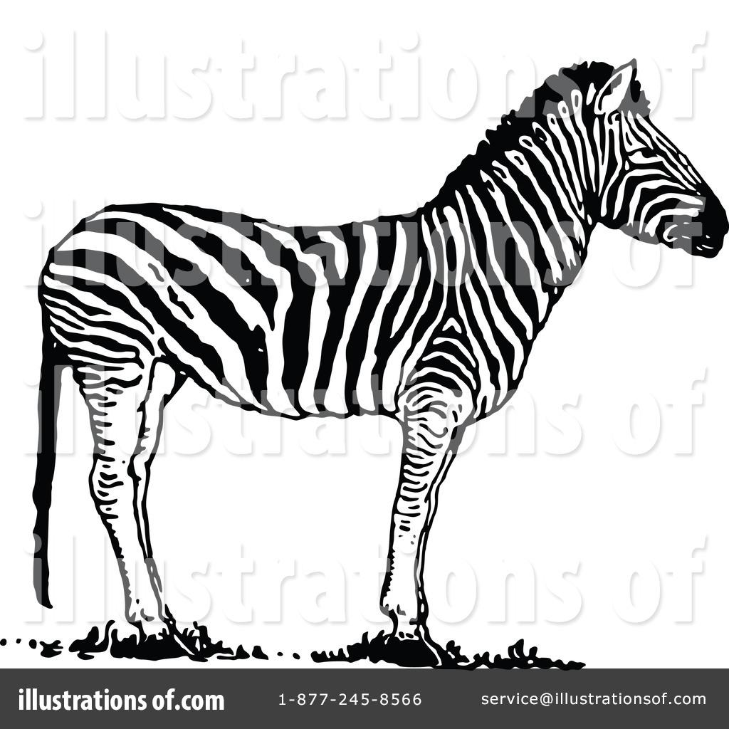 Zebra clipart vintage Free by Prawny #1180554 Illustration
