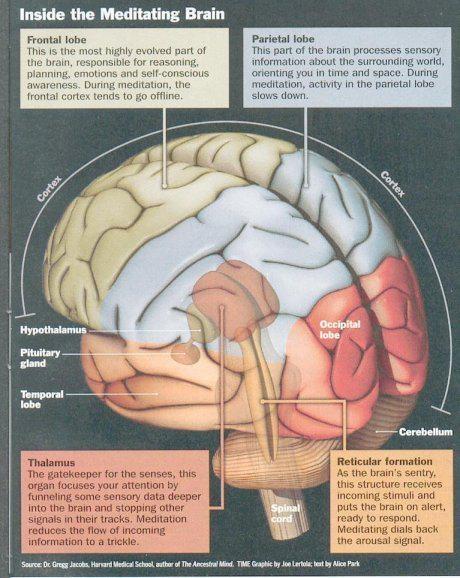 Zen clipart healthy brain #3