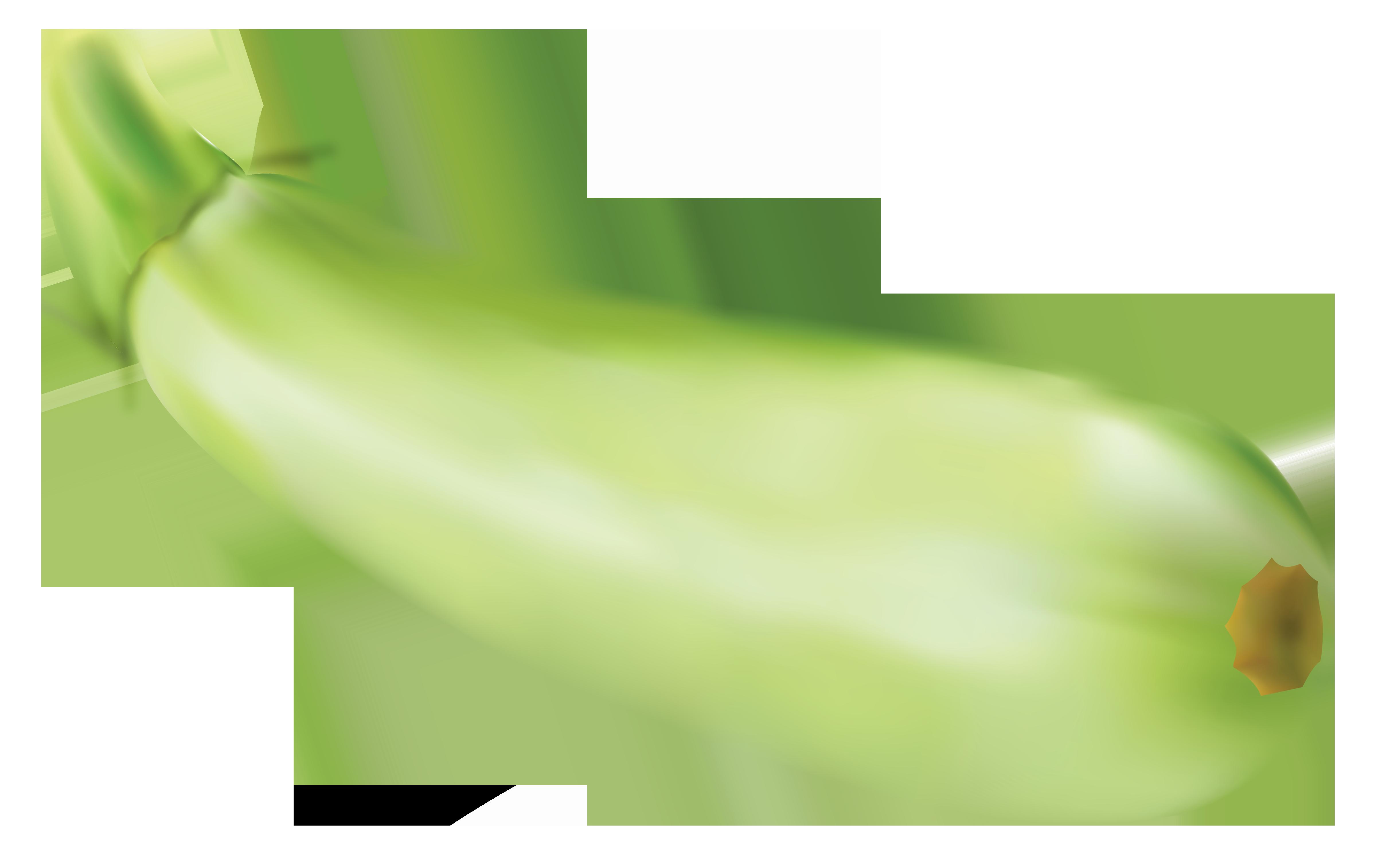 Zucchini clipart Zucchini Zucchini clipart clipart clipartfest