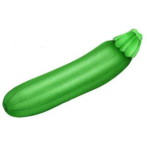 Zucchini clipart Download free Zucchini ClipartBarn art