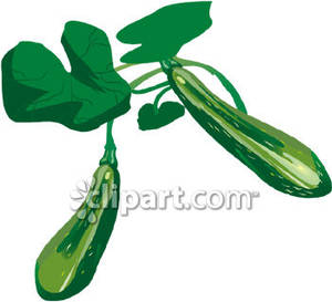 Zucchini clipart outline Free Images zucchini%20clipart Clipart Zucchini