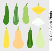 Zucchini clipart summer squash 740 Zucchini 1 and Clipart