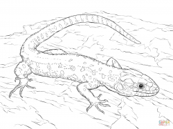 Drawn lizard yellow spotted
