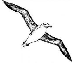 Albatross clipart cute