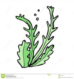Seaweed clipart algae