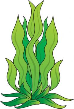 Drawn seaweed clipart