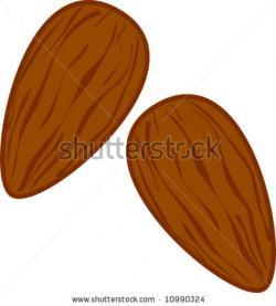 Almond clipart
